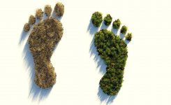 Tipps gegen den Klimawandel: Was kannst du tun?