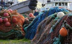 Überfischung der Meere – Fakten und Folgen
