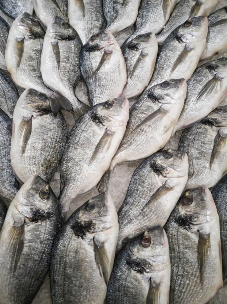 Überfischung der Meere